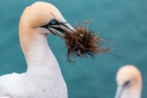 Birds clean their nests