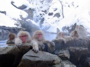 """""""Jigokudani hot spring in Nagano Japan 001″ by Yosemite"""